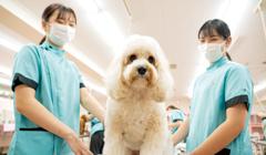 YIC京都ペット総合専門学校の強み