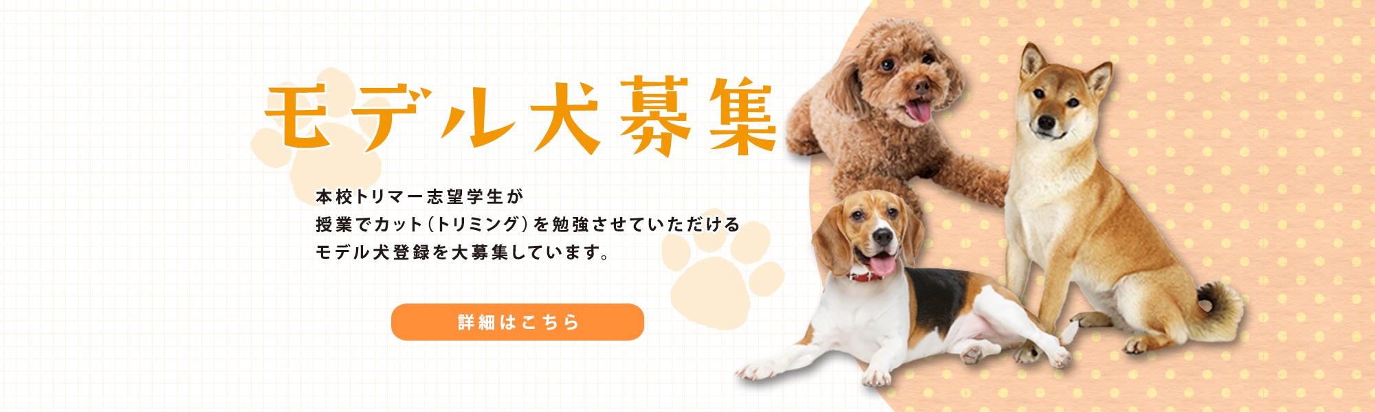モデル犬募集