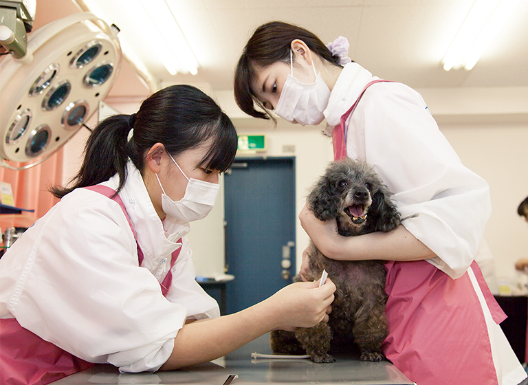 POINT1 多くの種類の動物を使って体験を通じて学習