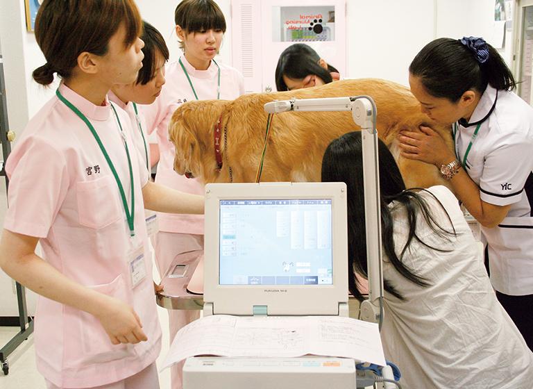 動物臨床検査学の様子