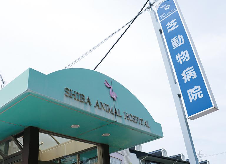 芝動物病院3
