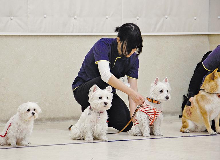 飼い主と理解を共有しながら、訓練を進めるテクニックを学ぶ