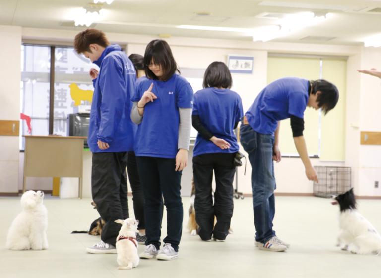 家庭犬訓練実習Ⅱの様子