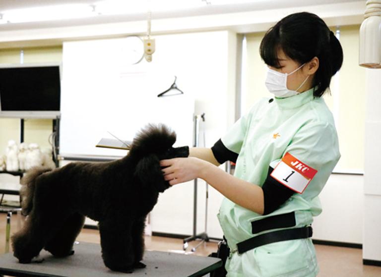 JKC公認 トリマー試験いろんな犬種の実習