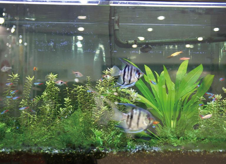 水生生物実習の様子