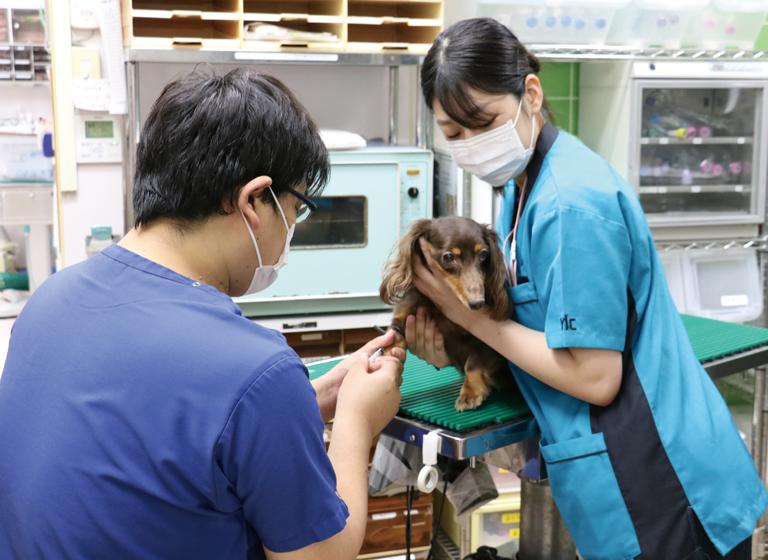 芝動物病院2