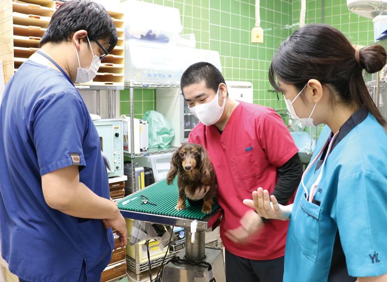 芝動物病院1