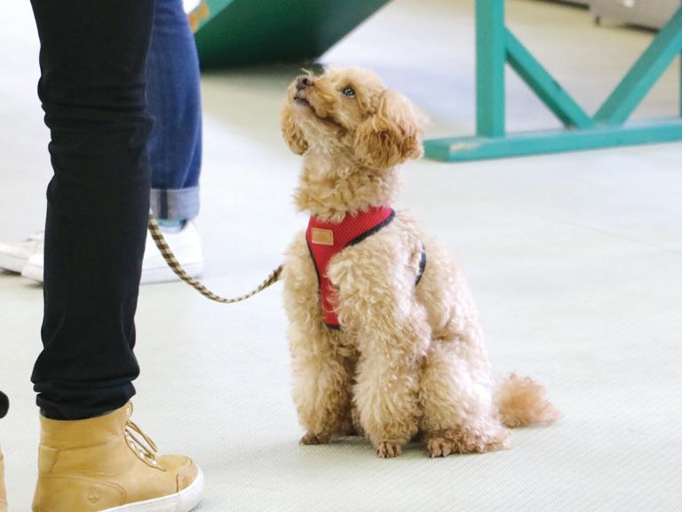 担当犬を決める(2年次4月)