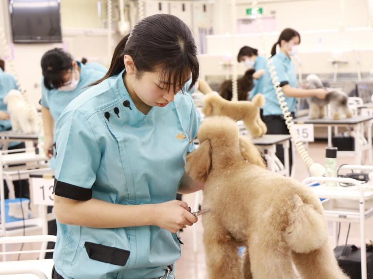 担当犬を決める(11・12月)