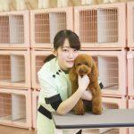 動物 専門学校 京都