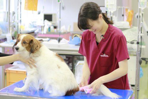 YIC京都ペット総合専門学校 動物看護科 卒業生イメージ2