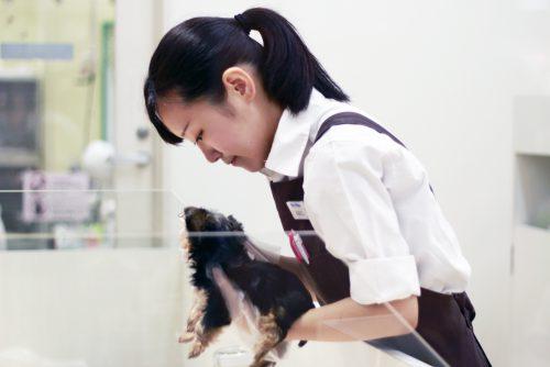 YIC京都ペット総合専門学校 ペット総合科 ペットアドバイザーコース 卒業生イメージ2