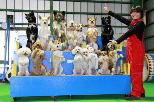 YIC京都ペット総合専門学校 ペット総合科 ドッグトレーナーコース 卒業生イメージ2