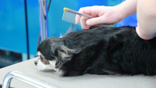 動物看護科 グルーミング実習2