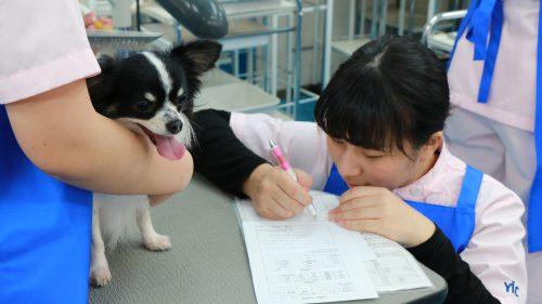 動物看護科 グルーミング実習5
