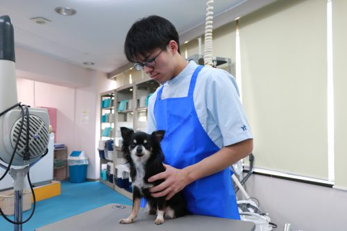動物看護科 グルーミング実習3