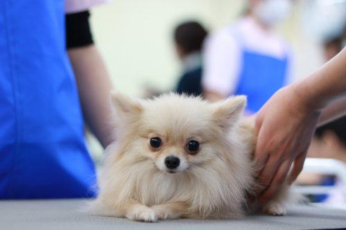 動物看護科 実習3