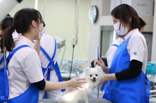 動物看護科 グルーミング実習6