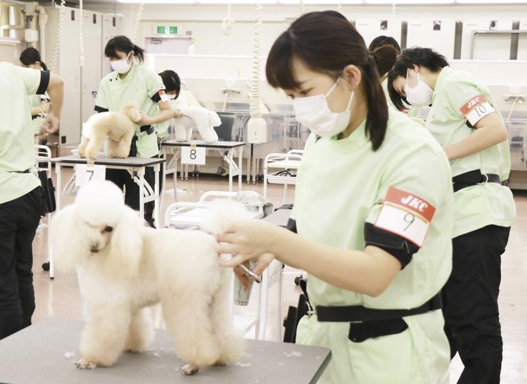 京都で唯一のJKCトリマー養成協力機関認可校!