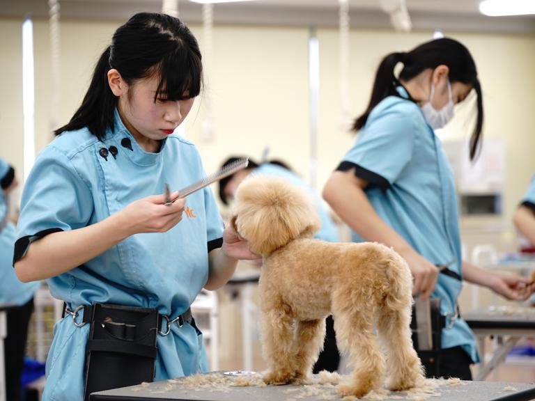 担当犬を決める(10月)