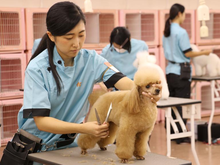担当犬を決める(10・11月)