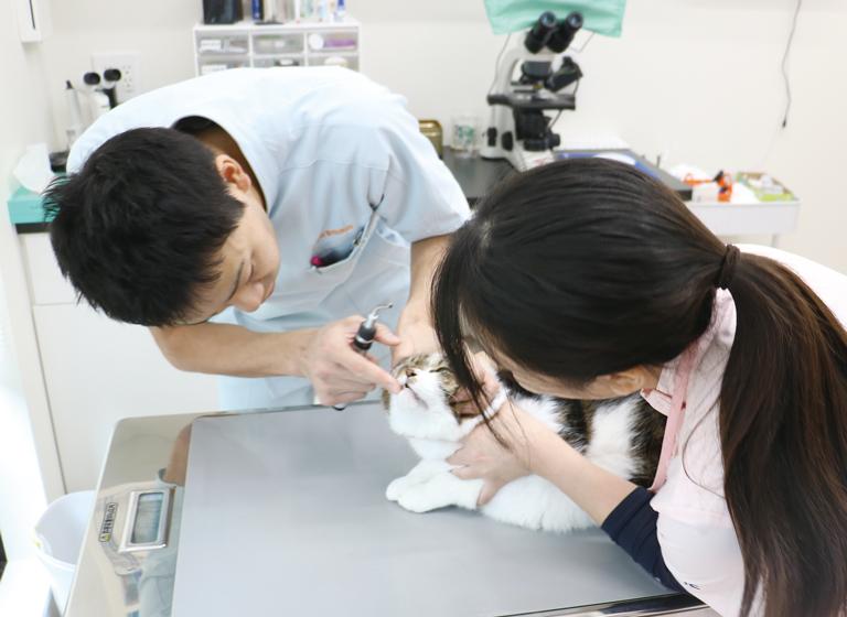 京都市獣医師会員病院での現場実習