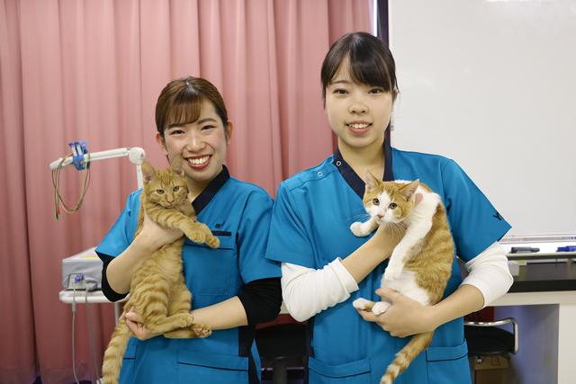 YIC京都の動物専門学校のオープンキャンパスに参加しよう