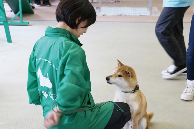 YIC京都で学べる資格、ペットの看護師