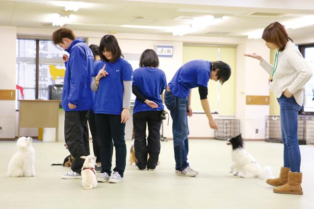 家庭のペットを訓練するドッグトレーナー!